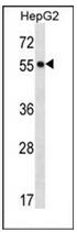 AP53376PU-N - POFUT2