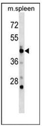 AP53378PU-N - POLD3
