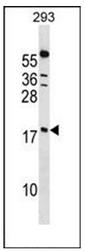 AP53412PU-N - PPIL1