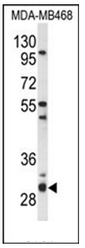 AP53488PU-N - PSMG2 / PAC2