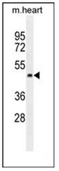 AP53493PU-N - PTCD2