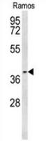 AP53497PU-N - PTGER3