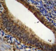 AP53504PU-N - Prothymosin alpha