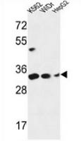 AP53528PU-N - PYCR1