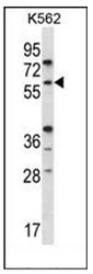 AP53570PU-N - RAG2