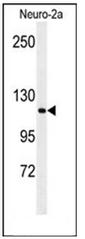 AP53634PU-N - RERE