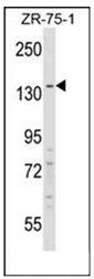 AP53642PU-N - RFX1