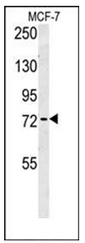 AP53665PU-N - RICH2