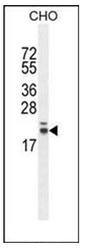 AP53680PU-N - RNF185