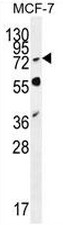 AP53688PU-N - RNF19B