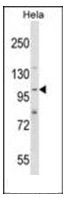 AP53904PU-N - SH3PXD2A