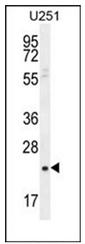 AP53914PU-N - SIAH3