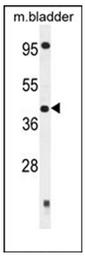 AP53933PU-N - SLFNL1