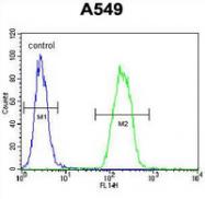 AP53975PU-N - Sorting nexin-24 (SNX24)