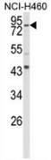 AP54016PU-N - Spartin / SPG20