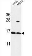 AP54032PU-N - SPRR1A / Cornifin-A
