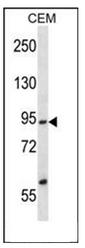 AP54054PU-N - SSRP1 / FACT80