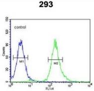 AP54089PU-N - Syntaxin 1A / STX1A