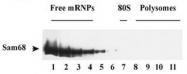AP55040PU-N - SAM68 / KHDRBS1