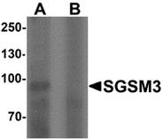 AP55474PU-N - SGSM3