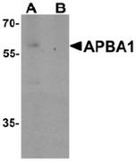 AP55509CP-N - APBA1 / MINT1