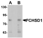 AP55592PU-N - FCHSD1