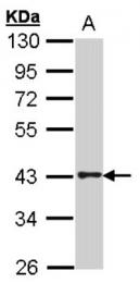 AP55674PU-N - GPR120