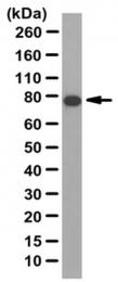 AP55972PU-N - ELMO1