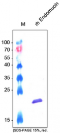 AP60011PU-N - Endomucin