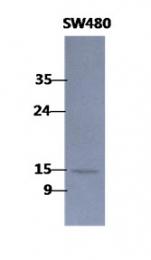 AM50092PU-N - Coactosin-like protein