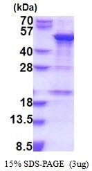 AR51637PU-N - SNAPC1 / SNAP43