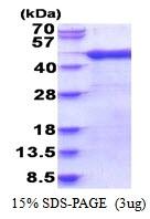 AR51642PU-N - Arfaptin-1