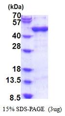 AR51643PU-N - Arfaptin-1