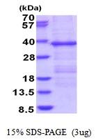 AR51671PU-N - HERPUD1