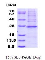 AR51681PU-N - MRPS23
