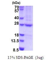 AR51691PU-N - N6AMT1 / HEMK2