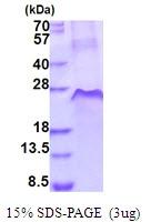 AR51703PU-N - CD120a / TNFR1