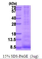 AR51743PU-N - Proepiregulin