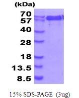 AR51752PU-N - NMT1