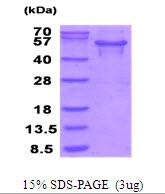AR51755PU-N - MTHFSD