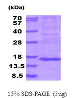 AR51756PU-N - MRPS28