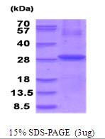AR51758PU-N - Folate receptor alpha