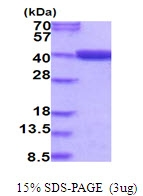 AR51792PU-N - MTHFD2