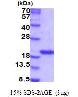 AR51801PU-N - Cyclophilin A