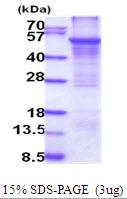 AR51813PU-N - CYP2E1
