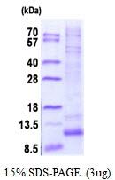 AR51821PU-N - G protein gamma 12