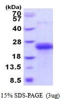 AR51824PU-N - CLEC1B