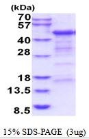 AR51840PU-N - CD4