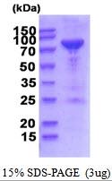 AR51844PU-N - PNPT1