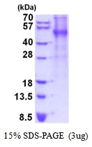 AR51877PU-N - Thrombopoietin